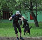 Семинар с Яном Скоггстером (20 мес)